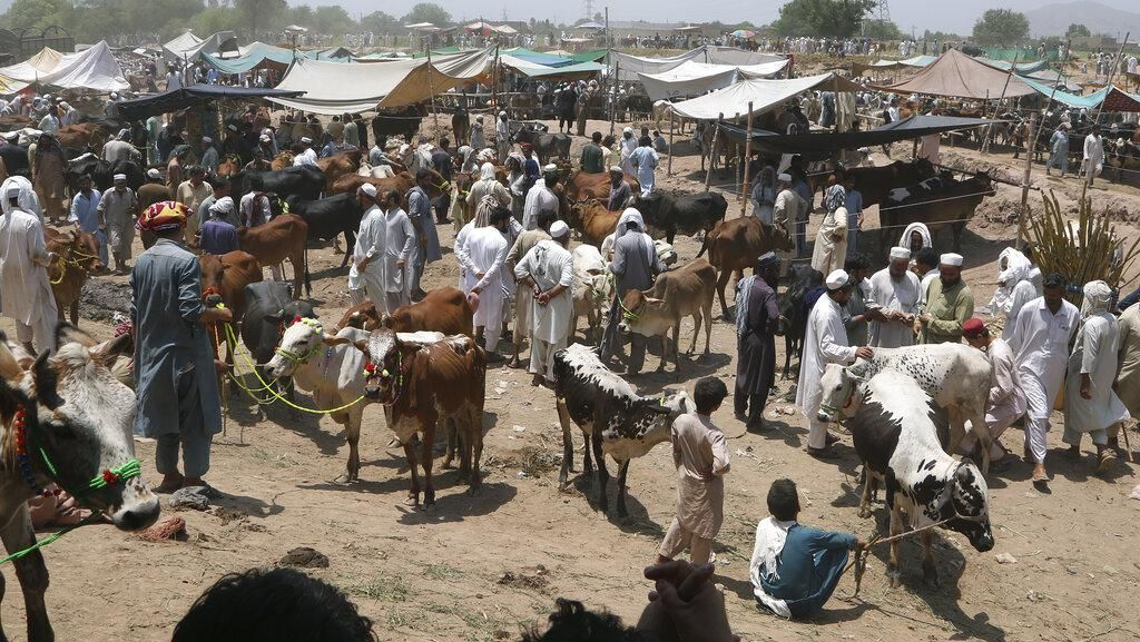 Jelang Idul Adha, Harga Hewan Kurban di Pakistan Meroket