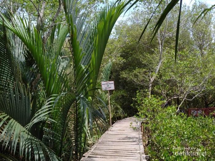 Jalan menyusuri hutan bakau terbuat dari bambu dan kayu