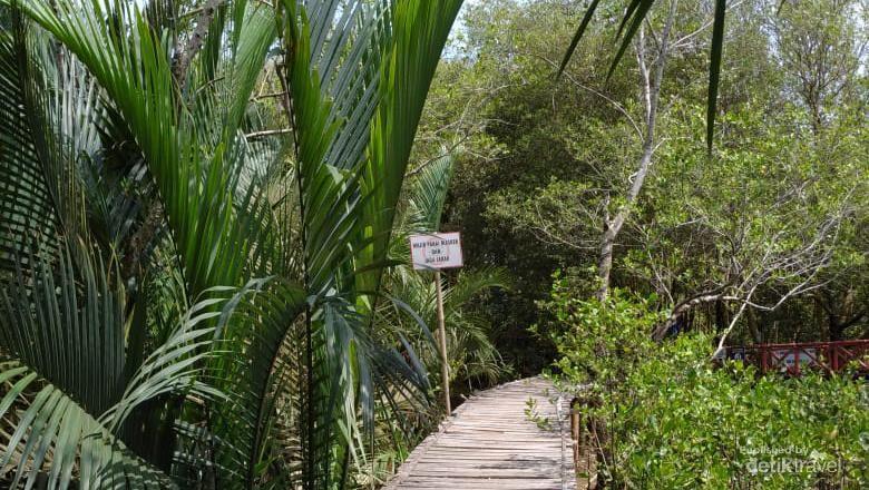 Mangrove Kulon Progo cocok buat kamu yang ingin santai menikmati alam sambil berfoto