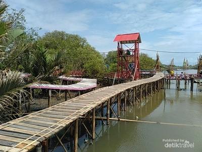 Potret Mangrove Kulon Progo, Pesona Hutan Bakau Seluas 3 Hektar Lebih