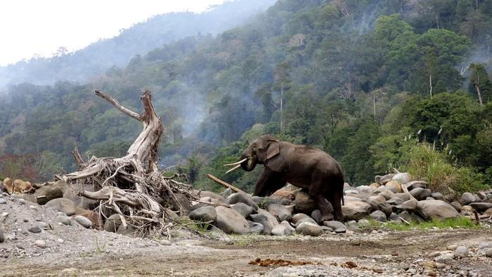 Sejak 2011 hingga hari ini, konflik manusia dengan gajah liar masih terus terjadi di Kabupaten Bener Meriah Provinsi Aceh, tidak sedikit tanaman perkebunan, tempat tinggal yang dirusak oleh satwa berbelalai itu, bahkan warga membuat tanda dengan berbagai untaian kata sebagai tanda konflik satwa masih berlangsung.
