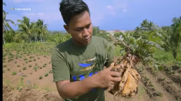 Dipecat Saat Pandemi Corona, Pria Ini Sukses Jadi Eksportir Ubi Madu