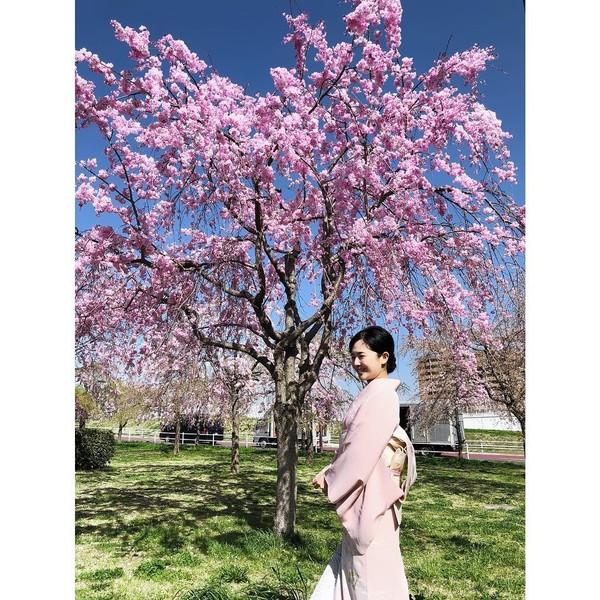 Berfoto memakai kimono dengan latar pohon sakura mekar. Sora lebih banyak menghabiskan waktunya jalan-jalan di dalam negeri saja. (Instagram/@aoi_sola)