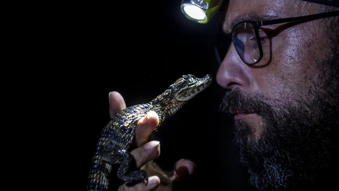 Laguna Marapendi jadi rumah bagi ribuan caiman, reptil yang memiliki bentuk serupa buaya. Populasi caiman pun dipantau ketat ilmuwan guna cegah kepunahan.