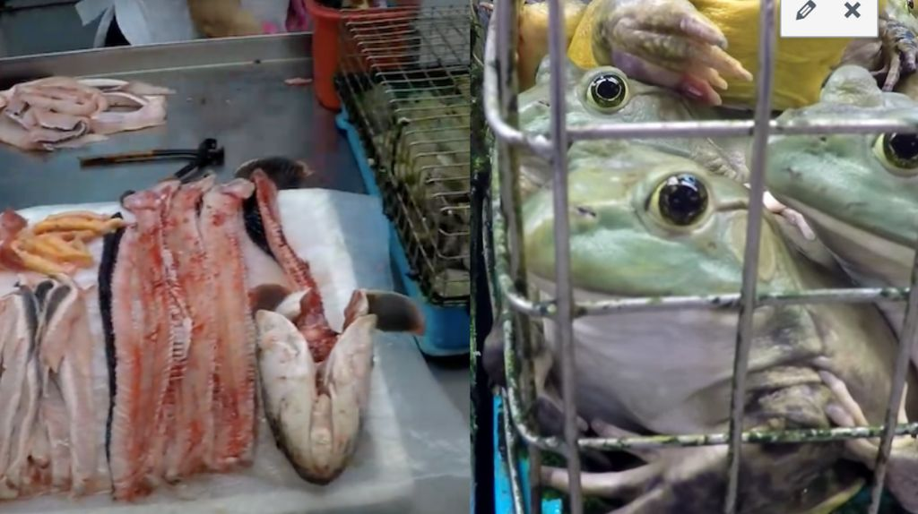 Pemerintah Singapura Larang Pasar Tradisional Jual Kodok dan Kura-kura Hidup