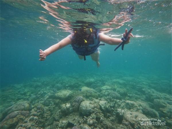 Snorkeling di laut Pulau Menjangan.