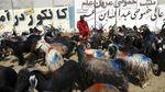 Sibuknya Pasar Hewan Kurban di Afghanistan Jelang Idul Adha