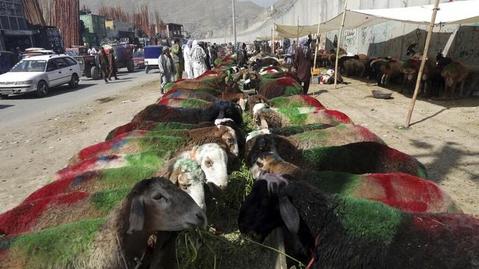 Aktivitas di Pasar hewan kurban Afghanistan tampak sibuk jelang Idul Adha. Pasalnya sejumlah warga mulai berdatangan untuk membeli hewan kurban.