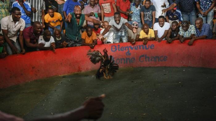 Judi sabung ayam ternyata juga dilakukan oleh warga di Haiti. Sabung ayam itu menawarkan pemenang sekitar $150 per pertarungan.