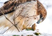 Audubon Photography Awards 2021