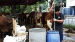 Penjual Hewan Kurban di Bekasi Tak Terdampak PPKM Darurat
