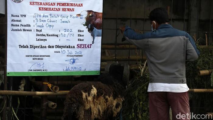 Pemberlakuan PPKM Darurat tidak berdampak banyak terhadap penjualan hewan kurban di Bekasi. Bahkan H-1 Lebaran Haji, rata-rata hewan kurban habis terjual.