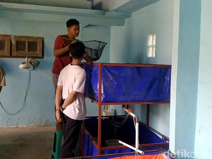 Budi daya lobster air tawar di Kabupaten Pekalongan, Selasa (20/7/2021).
