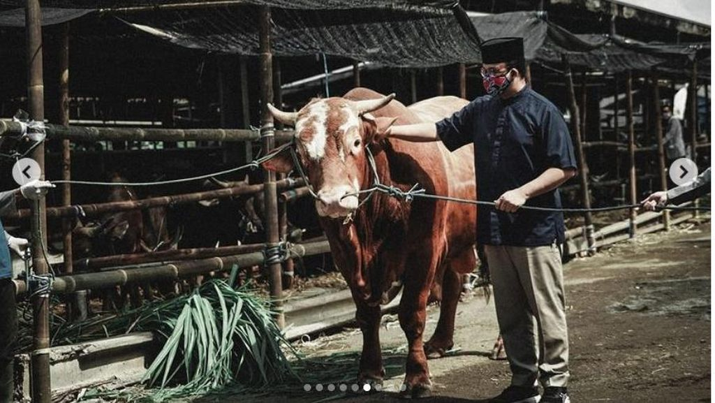 Anies Serahkan Kurban Sapi Limosin 1,1 Ton di RPH Dharma Jaya
