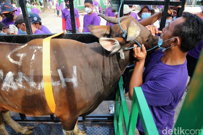 Pemotongan hewan kurban dilakukan Aren Jaya, Kota Bekasi, Jabar, Selasa (20/7). Ritual ini dilakukan dengan Prokes ketat karena pandemi COVID-19.