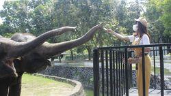 Unik Nih, Ada Wisata Memberi Makan Gajah di Candi Borobudur