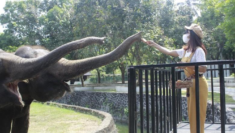 Paket wisata memberi makan gajah di kompleks Taman Wisata Candi Borobudur.