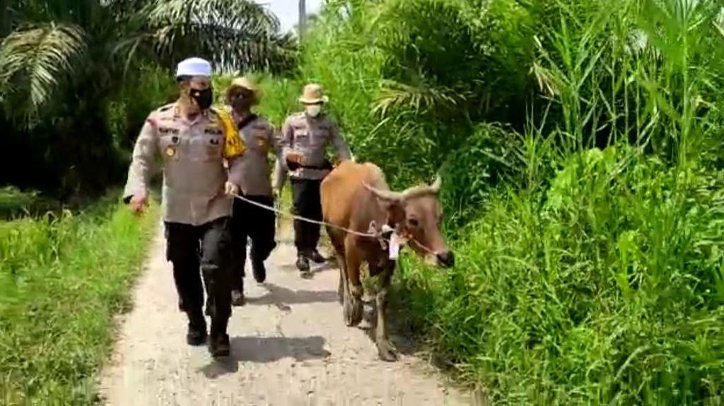 Polisi Serahkan Sapi Kurban ke Kampung Terpencil di Jambi