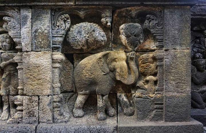 Relief gajah yang berada di Candi Borobudur