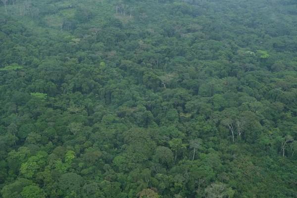 Salonga resmi menjadi taman nasional pada tahun 1970 oleh mantan presiden Mobutu Sese Seko.(UNESCO)