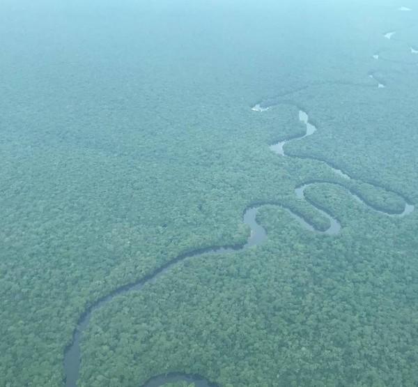 Taman Nasional Salonga merupakan hutan hujan lindung terbesar Afrika yang berada di Republik Demokratik Kongo.(UNESCO)