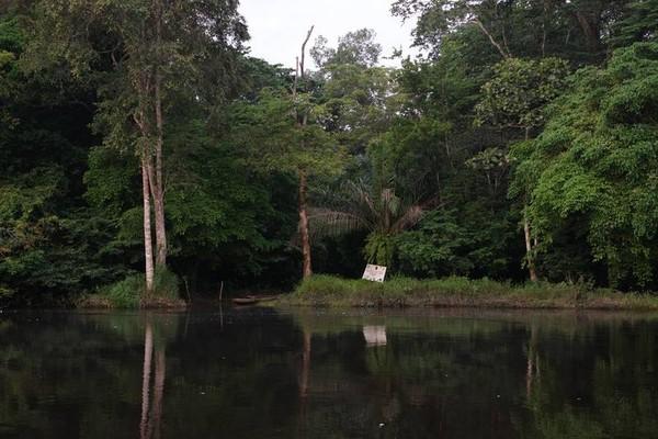 Taman Nasional Salonga adalah salah satu habitat spesies langka di dunia. (UNESCO)
