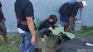 Via Vallen Kurban di Rumah, Alphard Gosong Bikin Salah Fokus