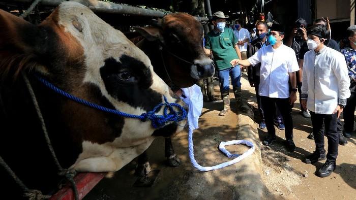Pembagian daging kurban diharapkan dapat membantu masyarakat yang terdampak pandemi di masa PPKM.