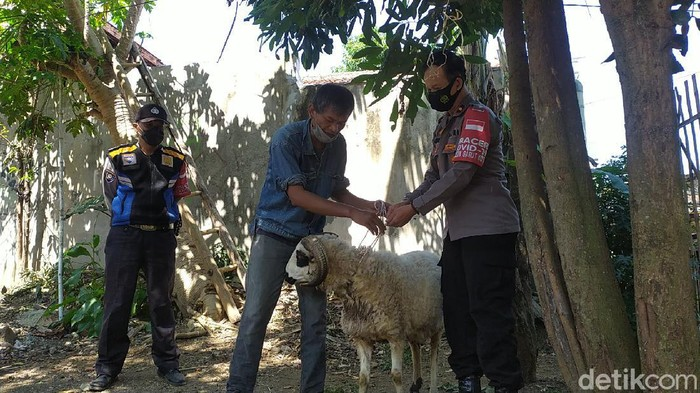 Seorang pedagang di Garut menerima seekor domba sebagai pengganti uang kurban yang habis dimakan rayap.