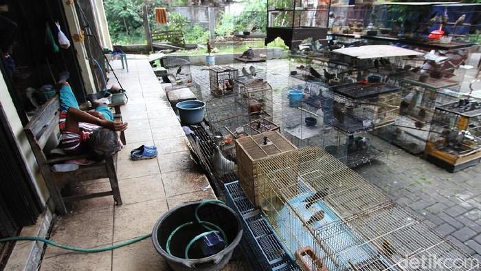 Keluhan imbas PPKM kini datang dari para pedagang burung di Pasar Hewan Depok, Solo, Jawa Tengah.