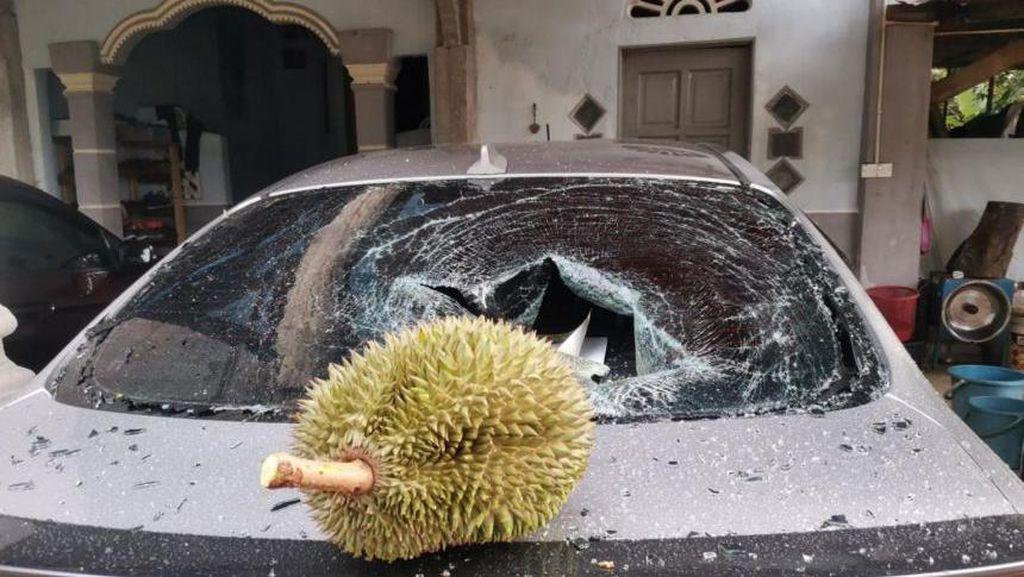 Jatuh di Atas Mobil, Durian Ini Dijual Seharga Rp 1,7 Juta