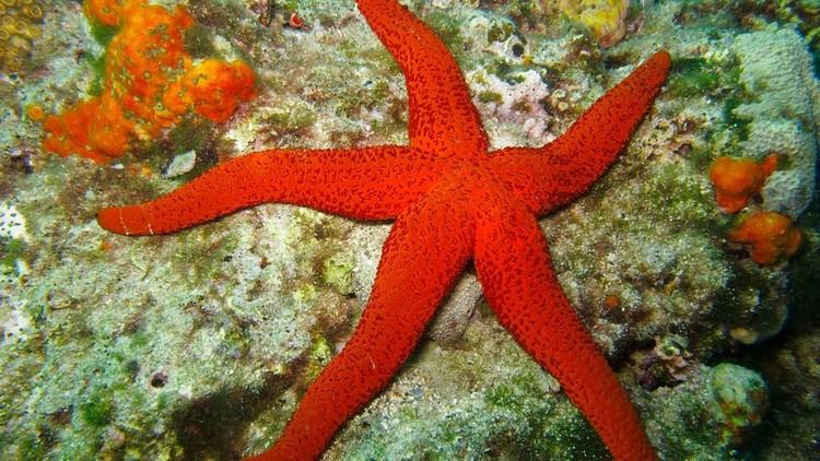 hewan laut raksasa