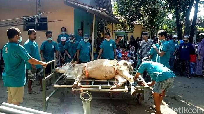 Warga Pekalongan, Ruli Muhamad Darwis (40), membuat alat jagal sapi portabel. Alat tersebut bisa untuk menjagal sapi dengan berat badan hingga 2 ton lho.