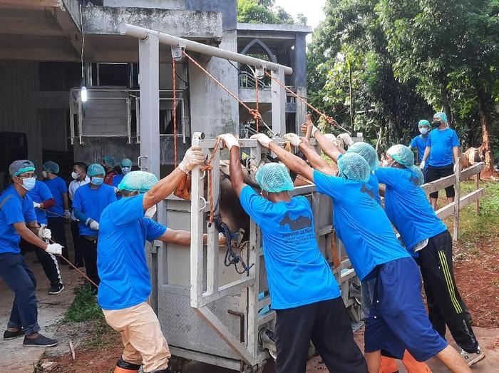 Proses penyembelihan hewan kurban di kantor Wali Kota Jakarta Selatan (Yogi Ernes-detikcom)