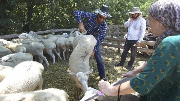 Di hari raya Idul Adha atau lebaran haji, umat Islam yang mampu dianjurkan untuk menyembelih hewan kurban.