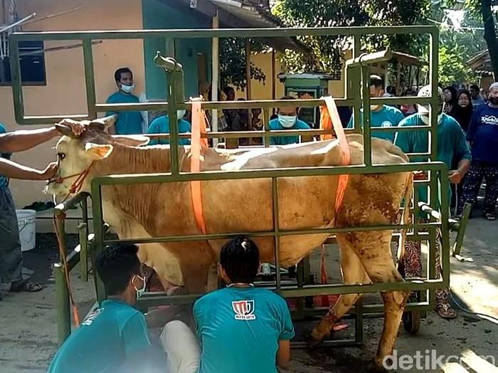 Warga Pekalongan membuat alat jagal sapi portabel untuk hewan kurban.