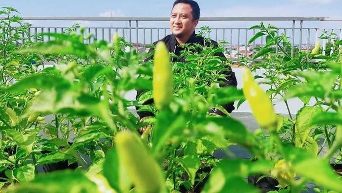 Hobi Berkebun, Ustaz Yusuf Mansur Punya Kebun Sayur di Rooftop Rumahnya