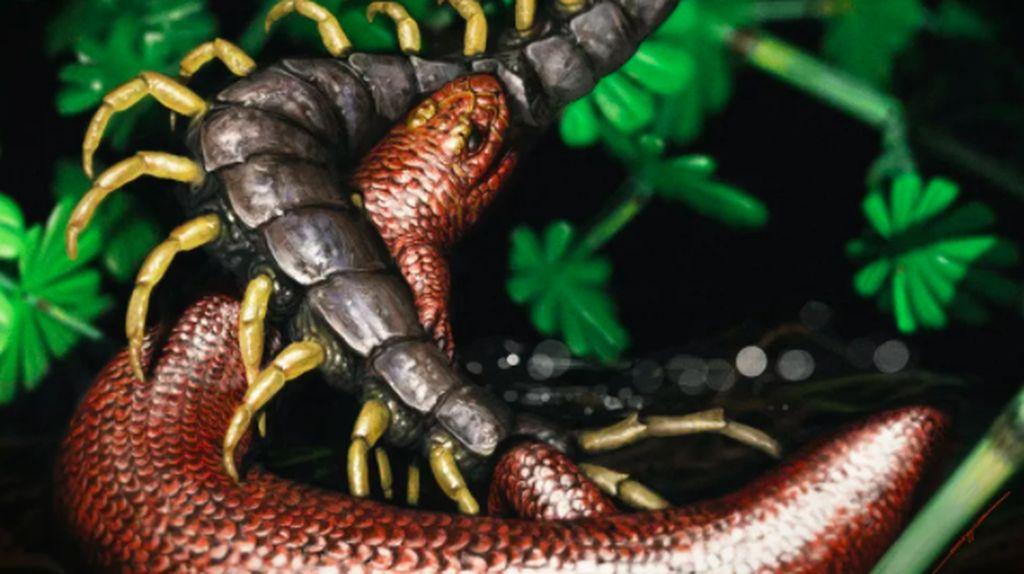 Ditemukan Nenek Moyang Reptil, Hidup 310 Juta Tahun Lalu