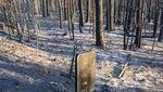Jejak Kebakaran Hebat yang Menghanguskan Hutan di Barat Amerika