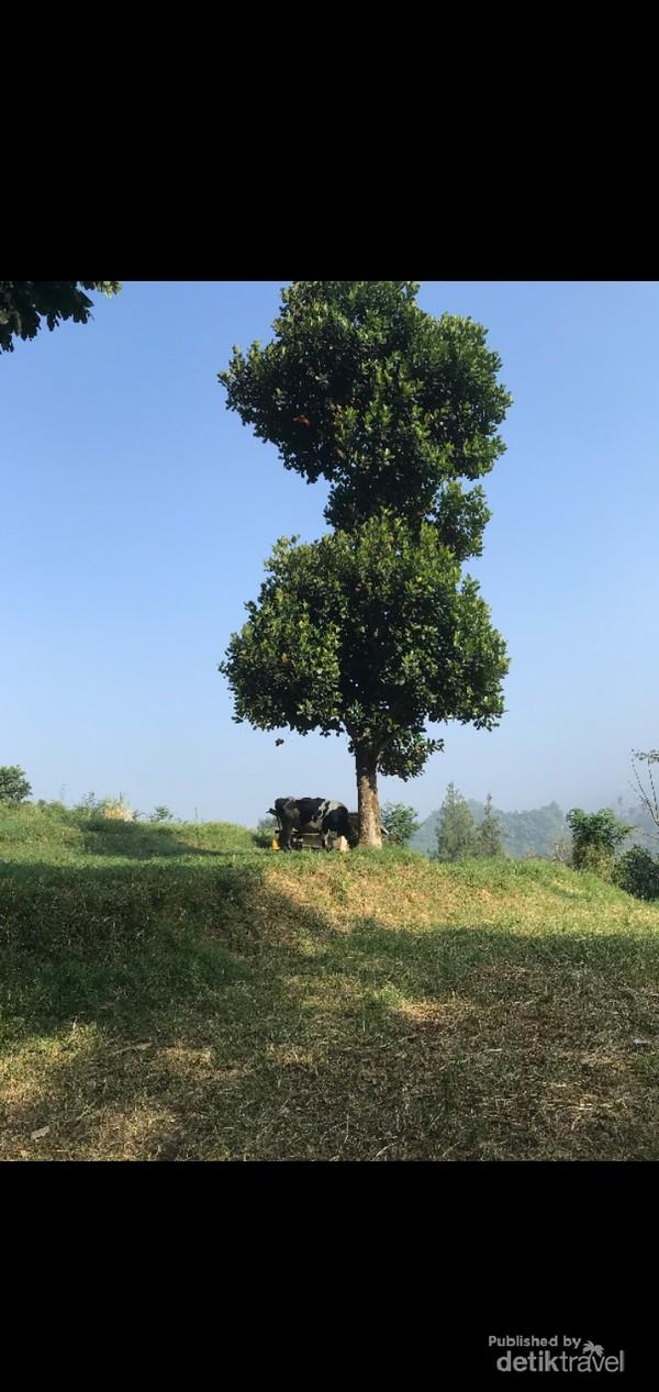Pemandangan di Dago Dairy