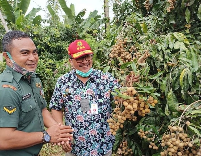 Genjot Daya Saing, Kementan Siap Kembangkan 900 Kampung Buah di RI