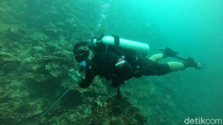 Kenalkan Objek Wisata Pulau Bulu Poloe Bupati Lutim Harap Bisa Dikelola Pemda.