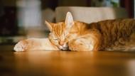 Bocah yang Bercita-Cita Menjadi Kucing