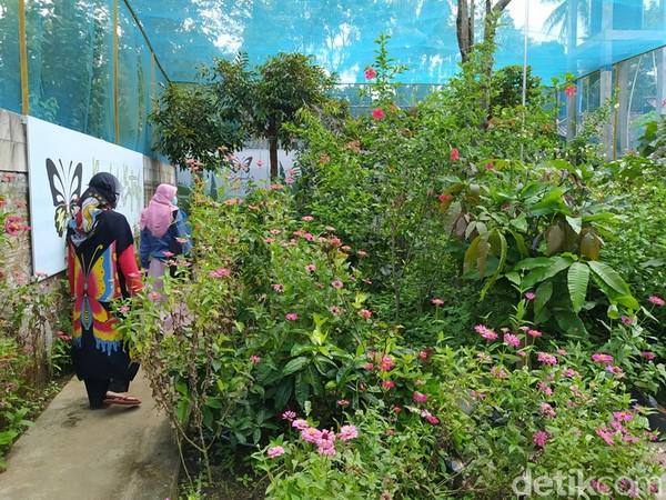 Di lokasi ini bisa belajar mengenal jenis kupu-kupu dan cara penangkarannya. Borobudur Butterfly Edu, tepatnya berada di Dusun Mendalan, Desa Tanjungsari, Kecamatan Borobudur. Adapun dari Candi Borobudur untuk sampai lokasi jaraknya sekitar 2 km.