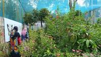 Penangkaran Kupu-kupu Borobudur