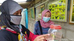 Melihat Tempat Penangkaran dan Galeri Kupu-kupu di Dekat Borobudur