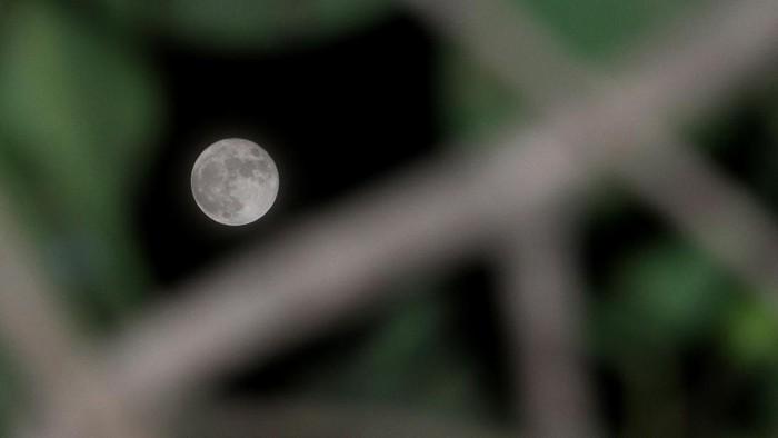 Bulan purnama Rusa terlihat di Desa Lamgapang, Krueng Barona Jaya, Aceh Besar, Aceh, Sabtu (24/7/2021). Fase bulan purnama adalah konfigurasi ketika Bulan terletak membelakangi Matahari dan segaris dengan Bumi dan Matahari. dimana jarak bulan dari bumi (geosentrik) sekitar 364.546 kilometer dan terletak di konstelasi Capricornus yang membentuk sudut 5,1 derajat terhadap ekliptika sehingga setiap fase bulan purnama tidak selalu beriringan dengan gerhana bulan ANTARA FOTO/Syifa Yulinnas/hp.