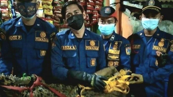 Petugas Suku Dinas Penanggulangan Kebakaran Dan Penyelamatan (Gulkarmat) Jakarta Barat mengevakuasi buaya sepanjang 175 sentimeter dengan bobot 40 kilogram di Jalan Duri Selatan Gang Gerindo V RT06/06, Duri Selatan, Kecamatan Tambora, Sabtu (24/7/2021) petang. (ANTARA/HO-Sudin Gulkarmat Jakarta Barat)