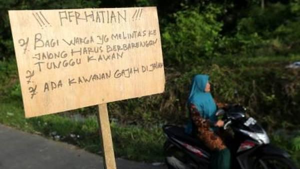 Berdasarkan data Balai Konservasi Sumber Daya Alam (BKSDA) Aceh sejak lima tahun terakhir konflik gajah liar yang memasuki pemukiman dan merusak perkebunan warga mengalami peningkatan bukan hanya di kabupaten Bener Meriah, namun gangguan satwa dilindungi itu juga terjadi di beberapa daerah lain seperti Pidie, Aceh Utara, Aceh Timur dan Kabupaten Aceh Jaya. (Irwansyah Putra/Antara)