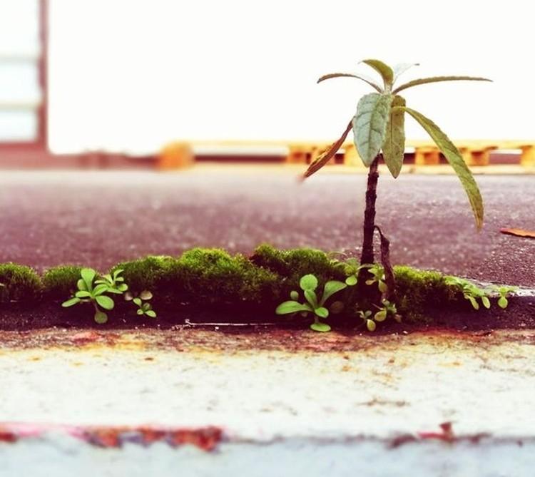 Kumpulan Potret Fenomena Alam yang Unik Tanpa Editan